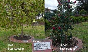 tree tripod